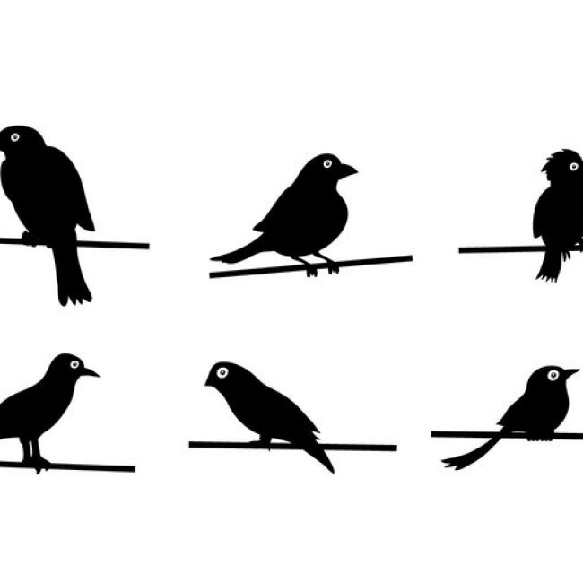 Birds On Wire Silhouette at GetDrawings.com | Free for personal use ...