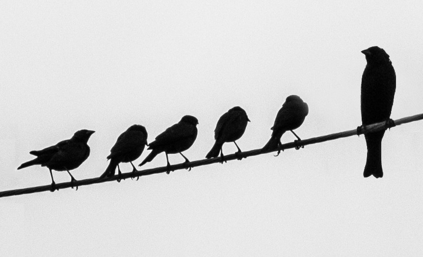 862x525 Little Birds And Big Bird On Wire