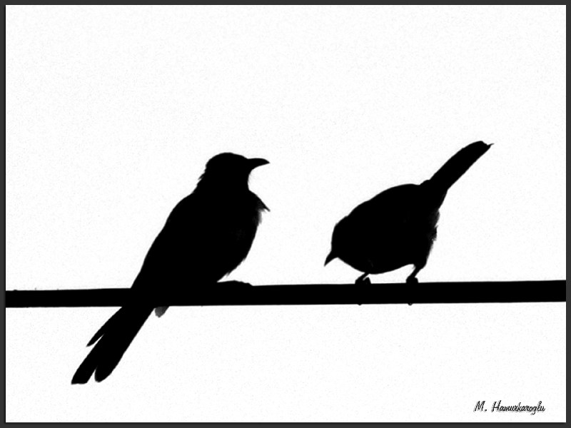 800x600 Two Birds On A Wire Silhouette