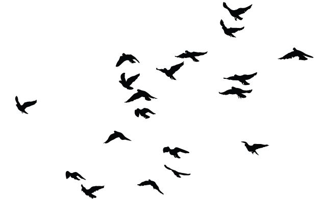 birds silhouette vector at getdrawings com free for personal use rh getdrawings com vector bird images vector birds flying