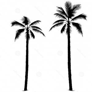 300x300 Photostock Vector One Palm Tree Outline Black Coconut Tree