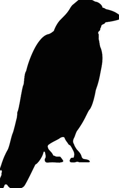 387x609 Black Bird, Caw, Standing, Stand Up, Crow, Watching, Viewing