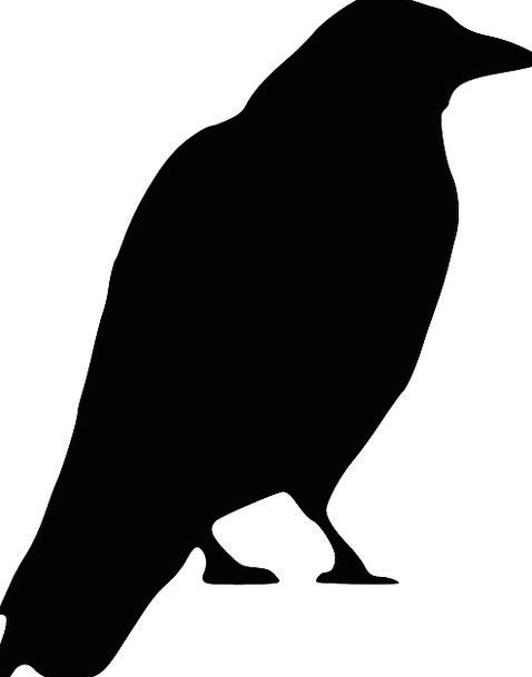 478x609 Crow, Caw, Silhouette, Outline, Black, Bird, Fowl, Standing