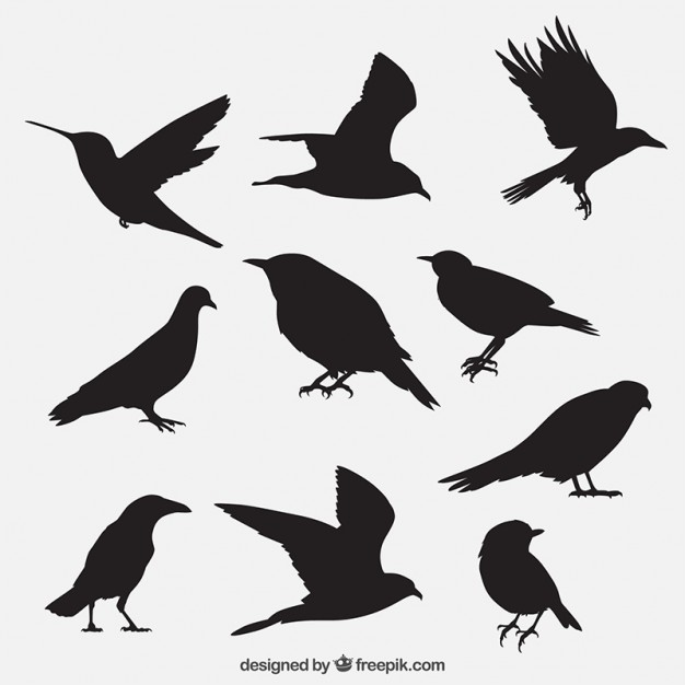 626x626 Crow Vectors, Photos And Psd Files Free Download