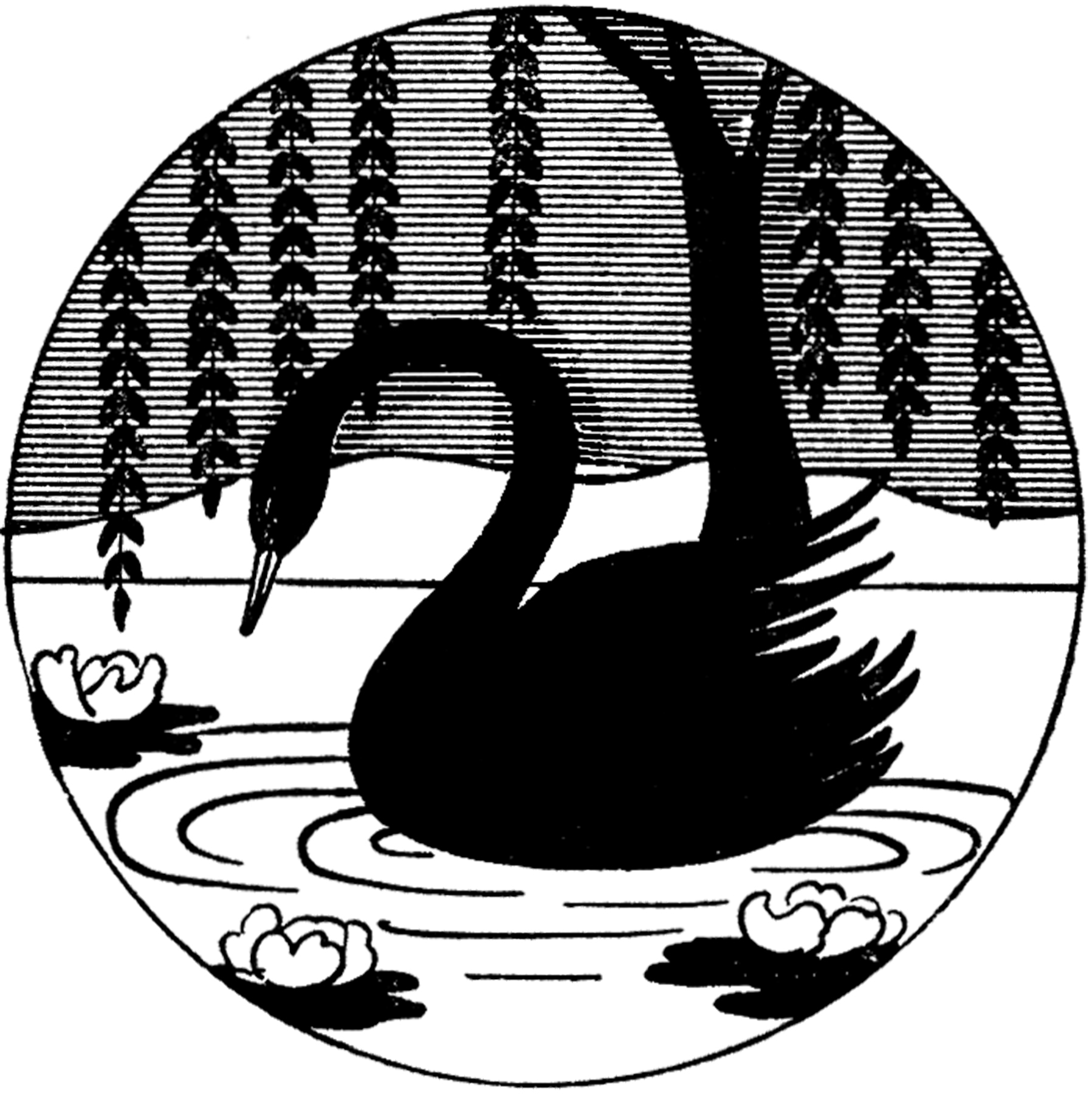 1797x1800 Vintage Black Swan Image