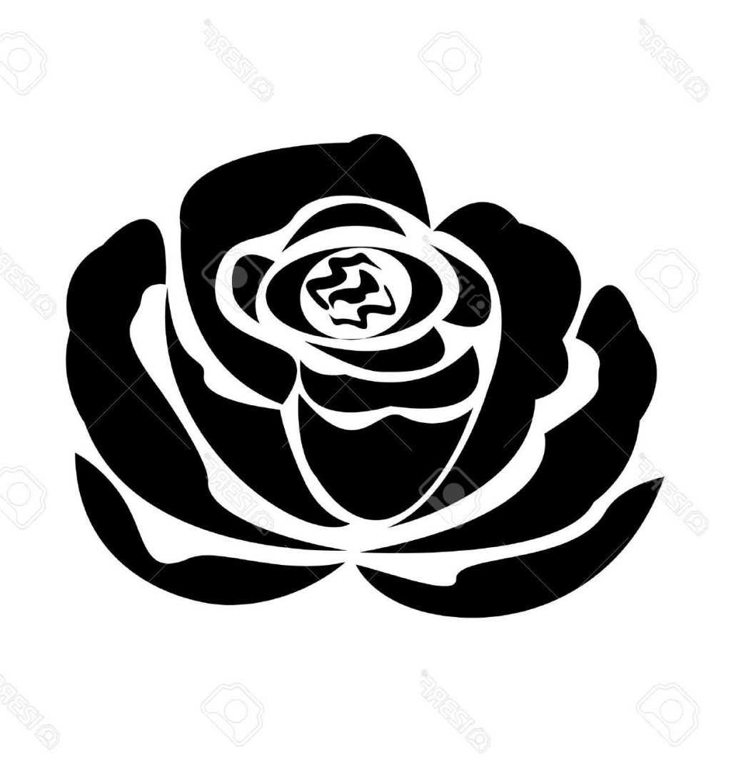 1024x1078 Top 10 Vector Black Rose Silhouette Stock Tattoo File Free