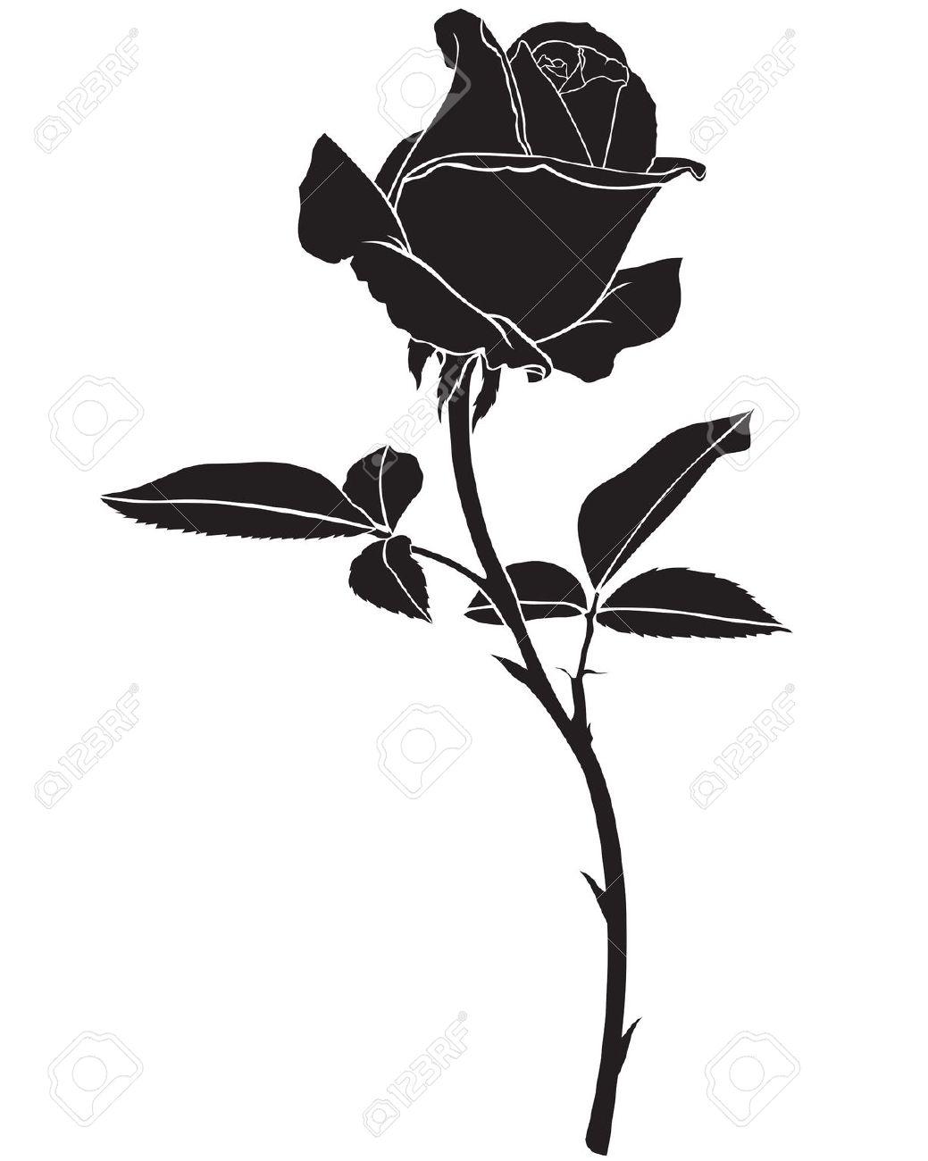 1039x1300 24805314 Silhouette Image Beautiful Rose Flower Stock Photo.jpg
