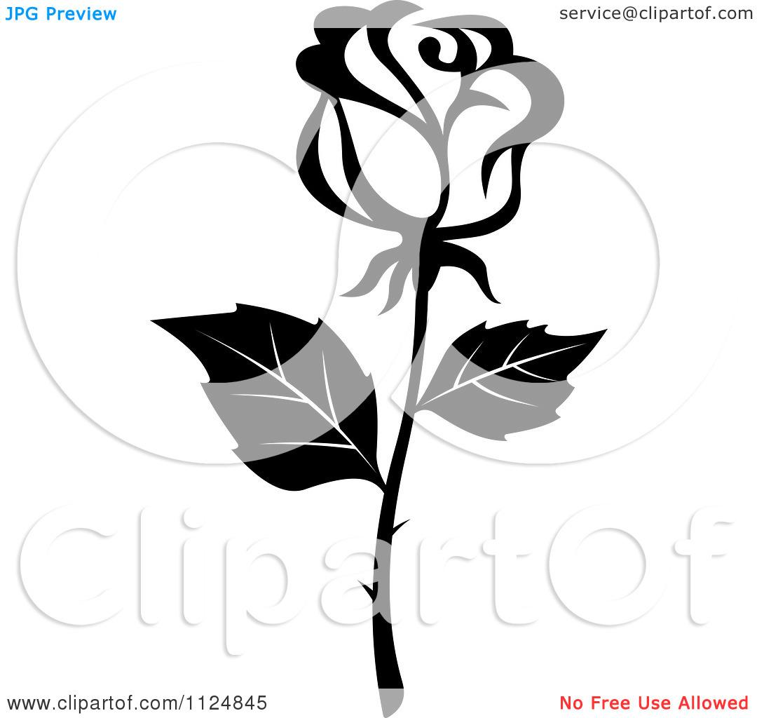 1080x1024 Black Rose White Flower Clipart