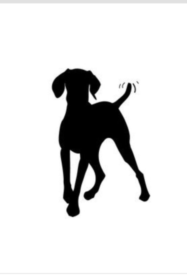 640x960 I Love This Silhouette Of A Weim Weimaraners