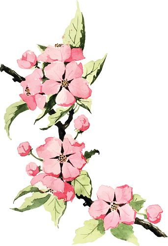 342x502 Apple Blossom Clip Art Silhouette Of Apple Blossom Art Clip Art