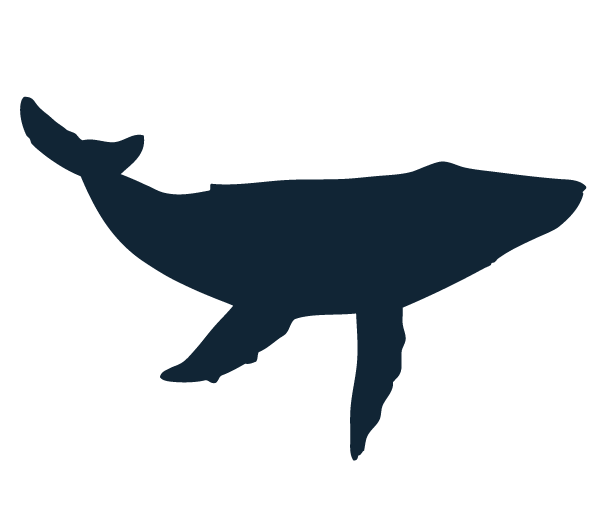 600x506 List Of Synonyms And Antonyms Of The Word Whale Silhouette