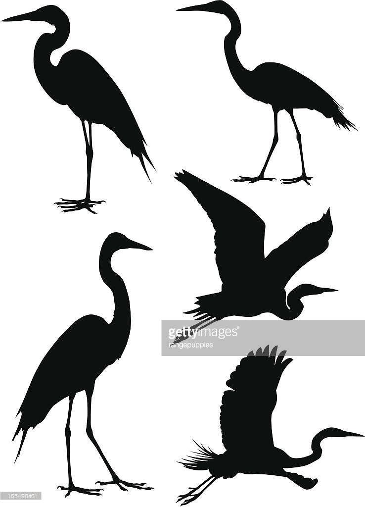 738x1024 A Collection Of Five Heron Silhouettes. For Other Bird Silhouettes