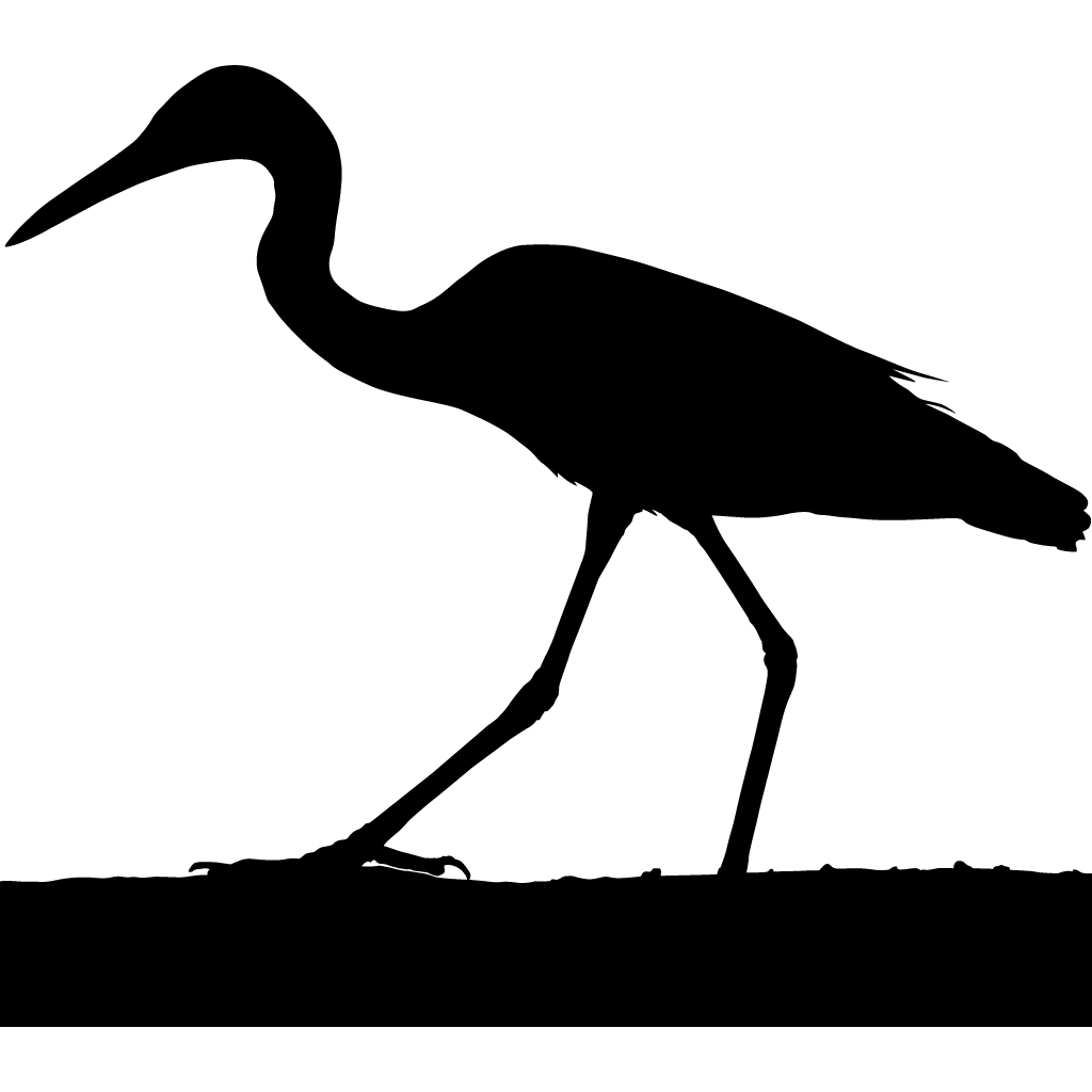 1024x1024 Herons Browse By Shape, All About Birds, Cornell Lab Of Ornithology