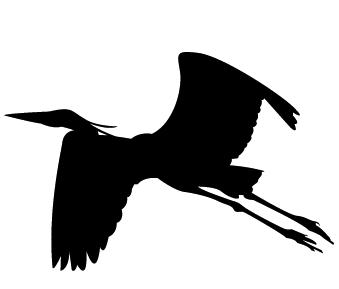339x289 Blue Heron Not Blue