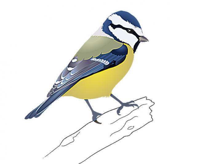 712x534 Oiseaux D'Hiver La Bleue