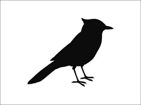 570x424 Blue Jay