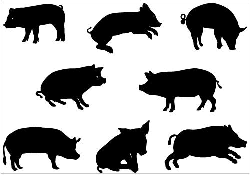 500x350 Boar Clipart Hog