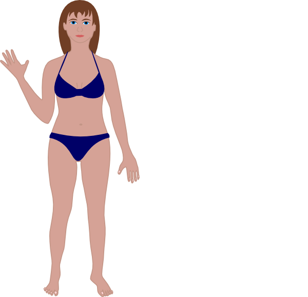 600x577 Female Human Body Clip Art