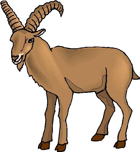 490x532 Boer Goat Silhouette