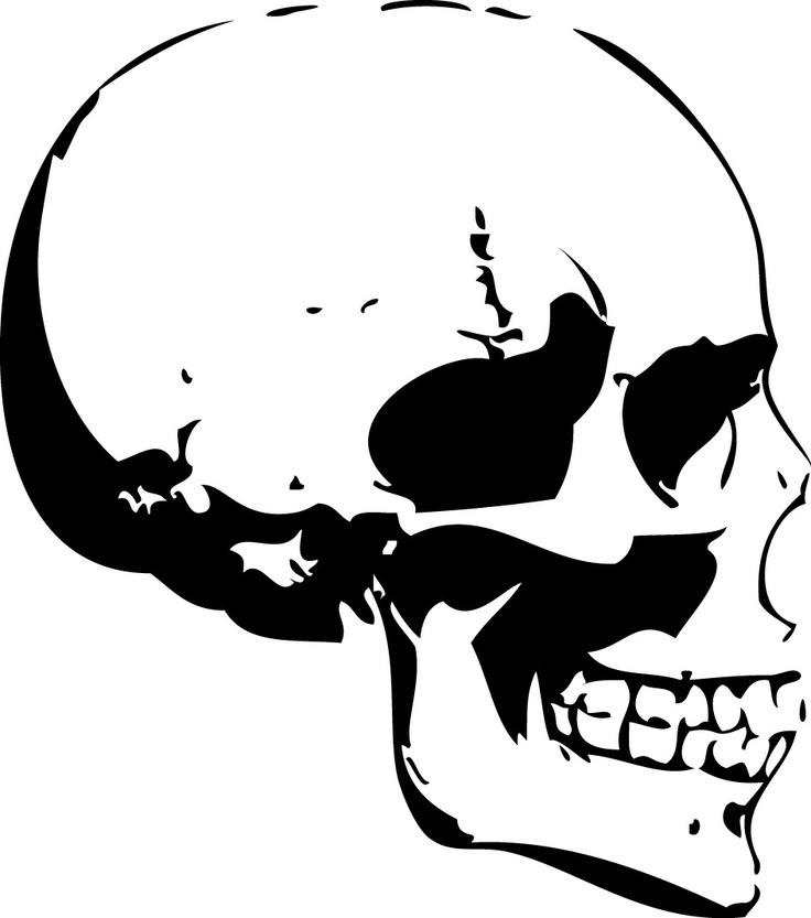 736x833 Skull Profile Bones