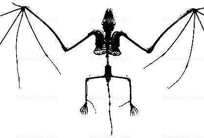 418x282 Bones, Skeleton, Skull Silhouette, Logo, Shape Images, Photography