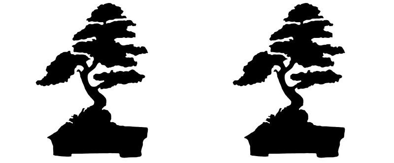 800x331 Japanese Bonsai Tree In Enso