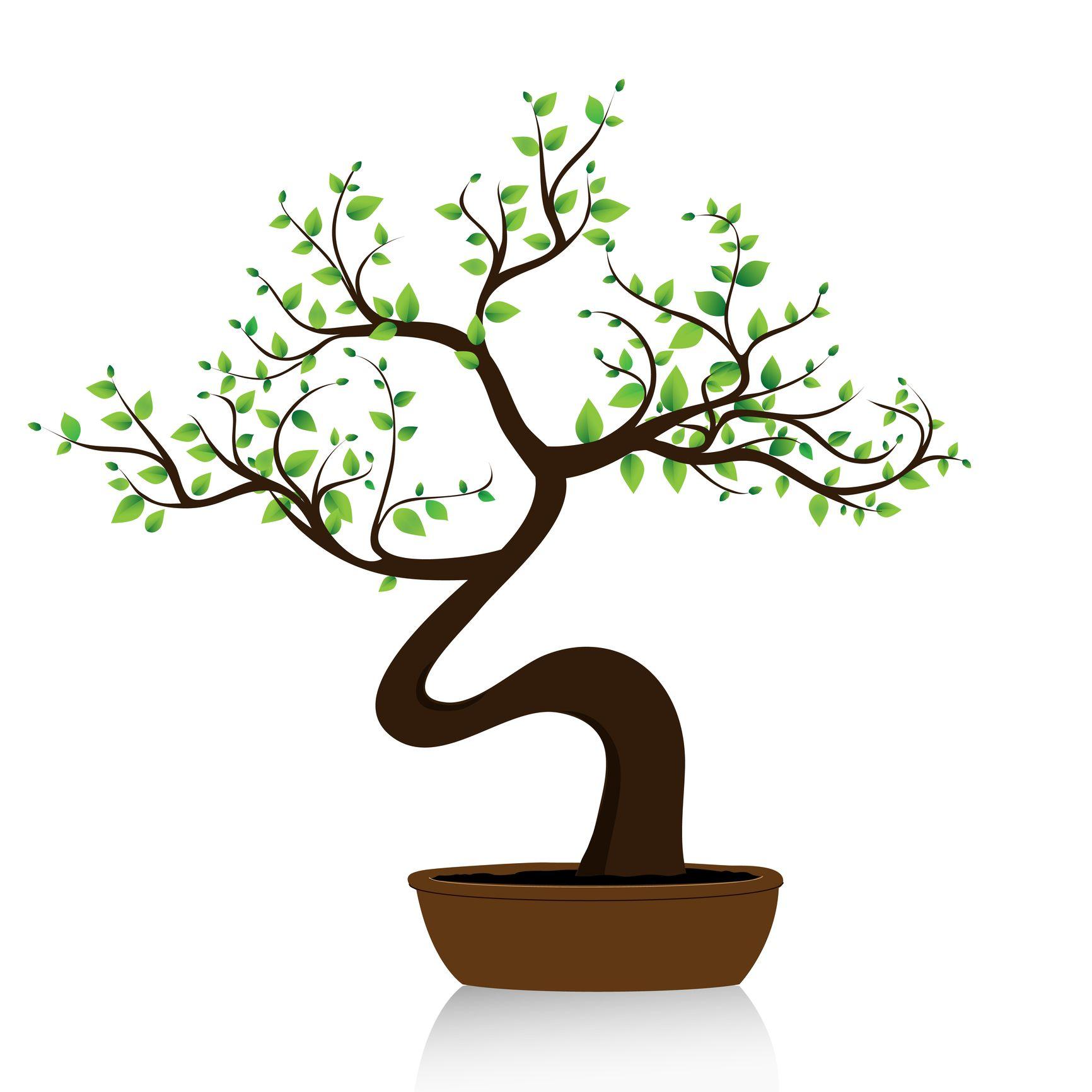 1732x1732 Bonsai Tree Bonsai Bonsai Tree Tattoos, Bonsai