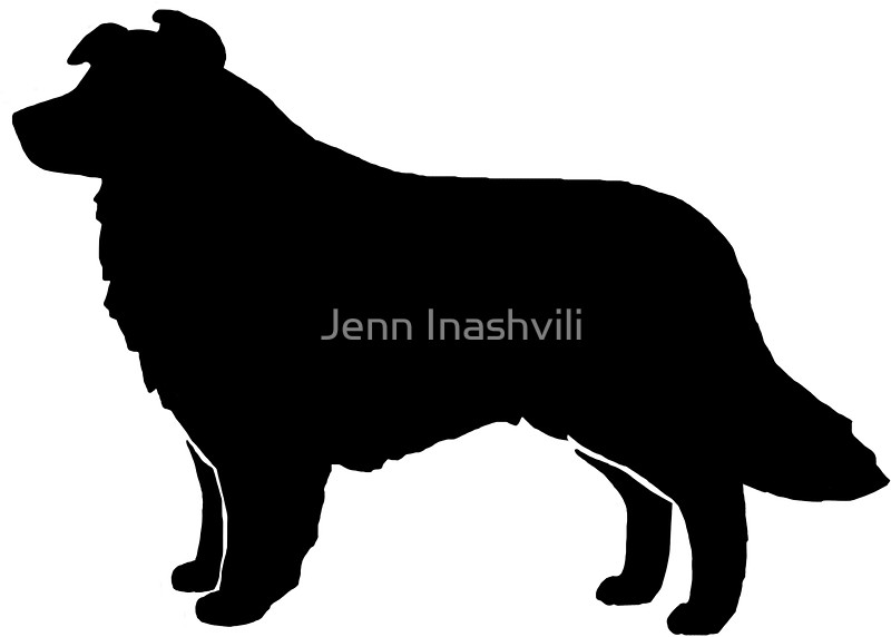 800x572 Border Collie Silhouette(S) Stickers By Jenn Inashvili Redbubble