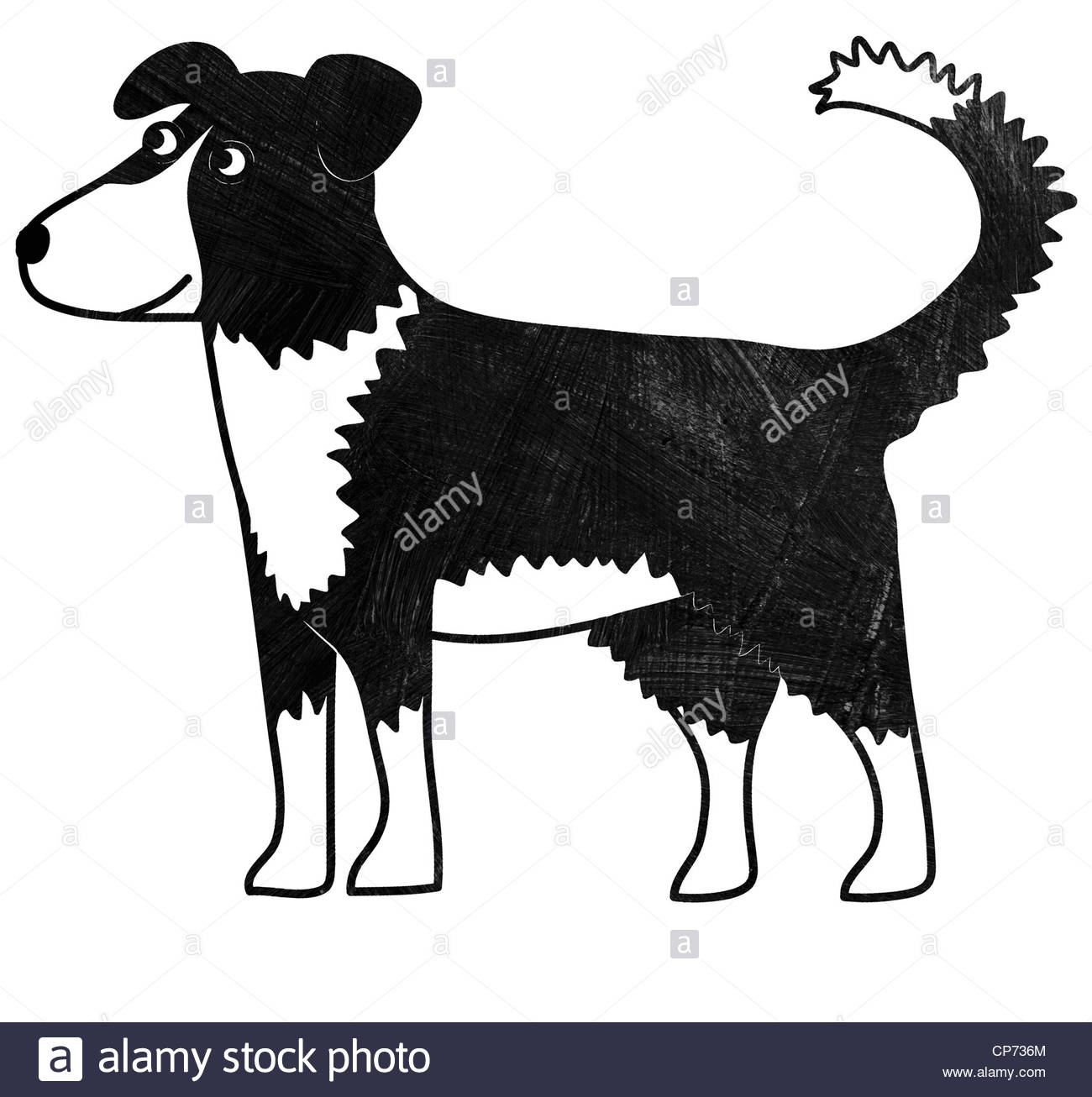 1300x1306 Border Collie Black And White Stock Photos Amp Images