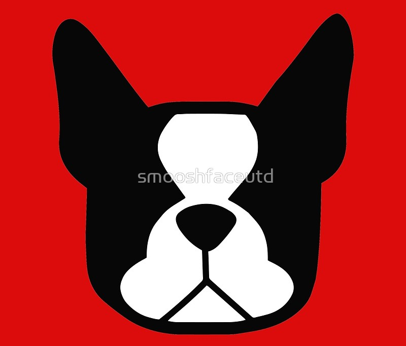 800x682 Boston Terrier Face In Black And White