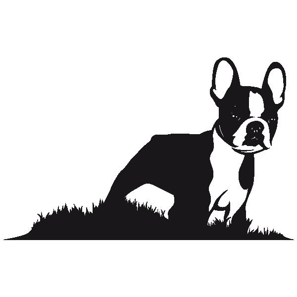 600x600 Sticker Boston Terrier Silhouette Cameo