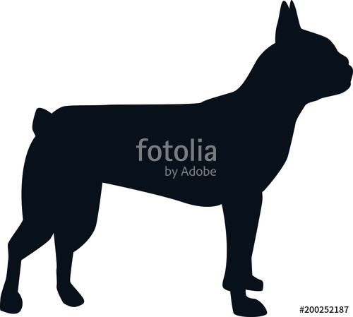 500x449 Boston Terrier Silhouette Black Stock Image And Royalty Free