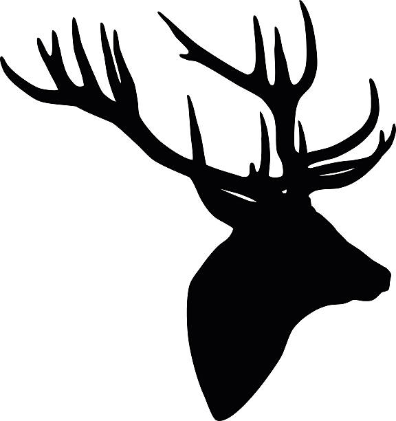 576x612 Deer Head Clipart Vectors Collection