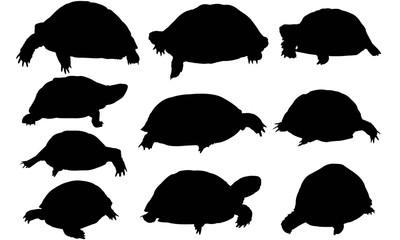 400x240 Search Photos Tortoise