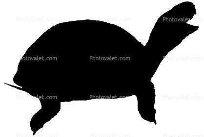 418x282 Box Turtle Silhouette, (Terrapene Carolina), Emydidae, Logo, Shape