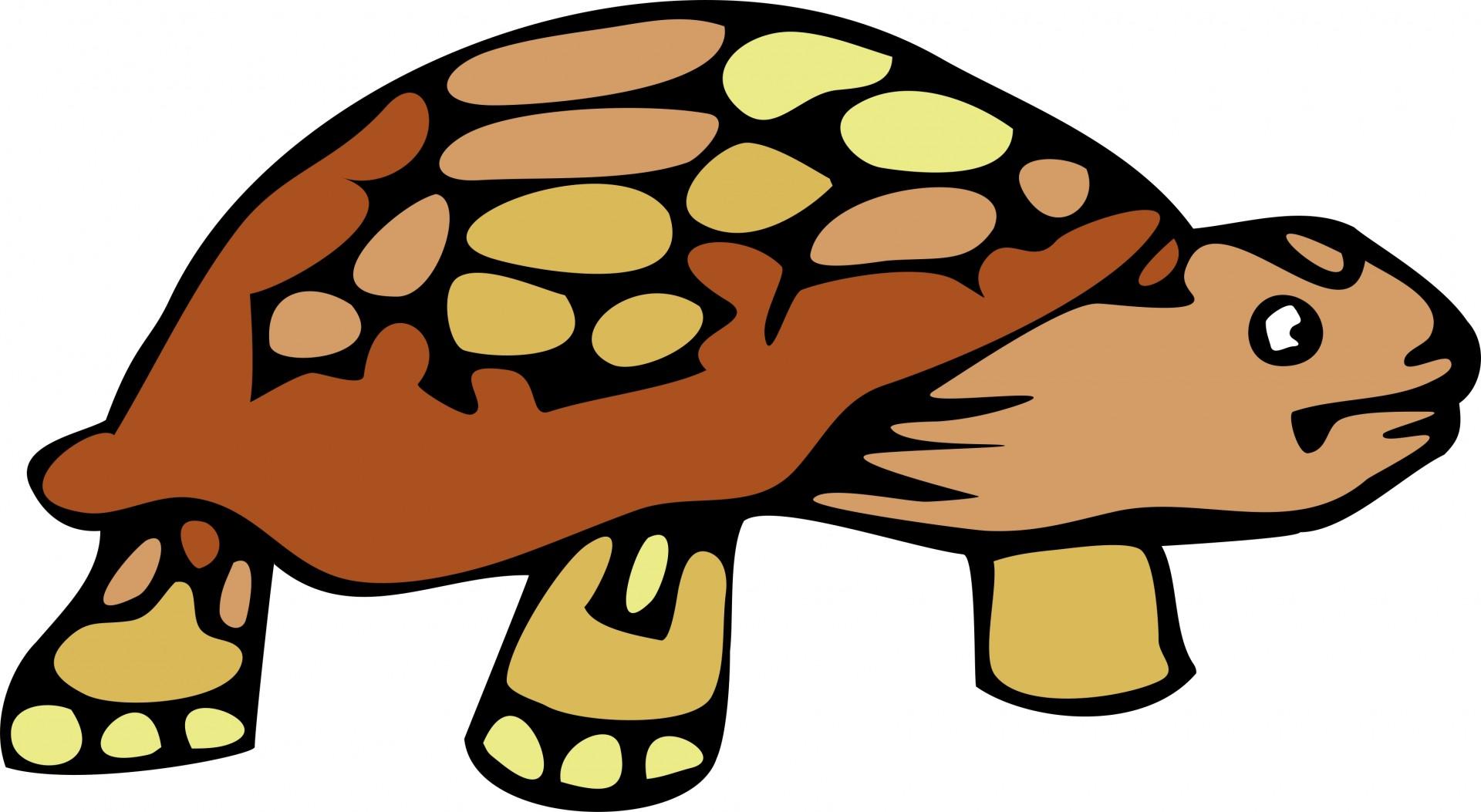 1920x1053 Turtle Clipart Desert
