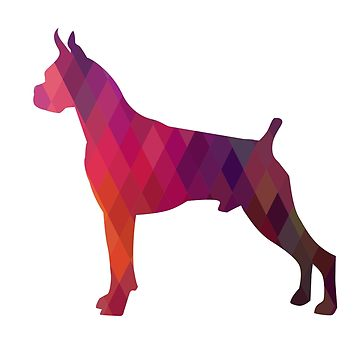 360x360 Italian Greyhound