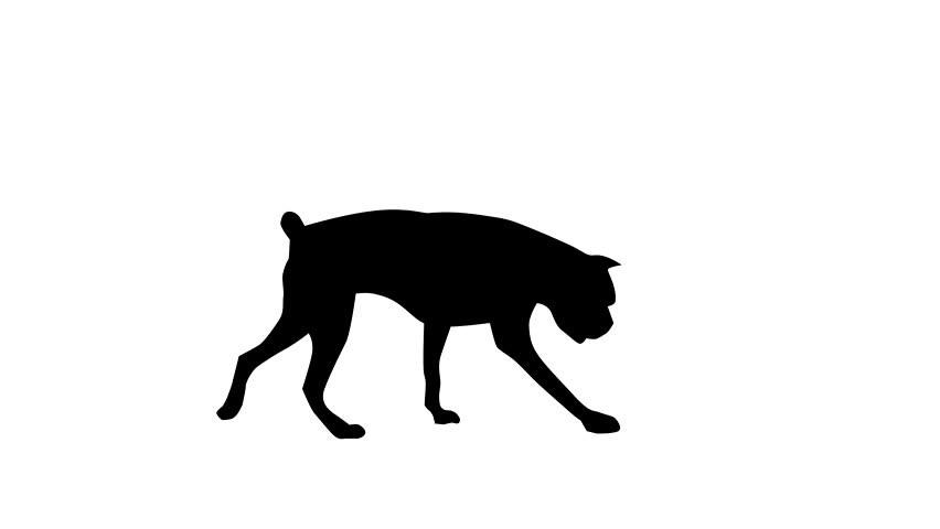 852x480 Silhouette Of The Black Dog (Boxer), Animation Stock Footage Video