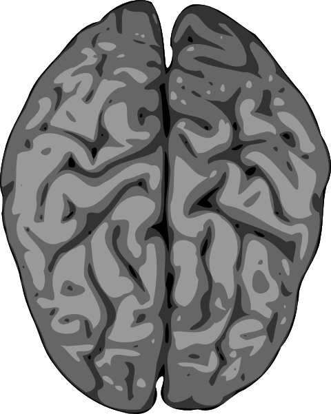 480x601 Grey Brain Clip Art Free Vector 4vector