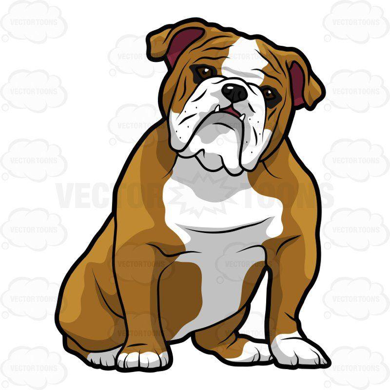 800x800 Cute Bulldog Clipart Tomasa Bulldog Clipart