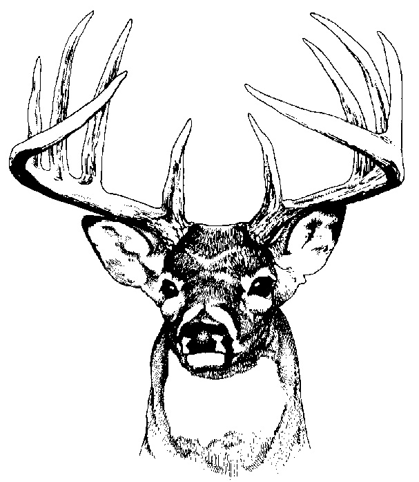 607x697 White Tailed Deer Clipart Deer Silhouette