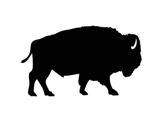 570x429 Bison Buffalo Nature Mammal Wild Animal Wildlife Bull Power