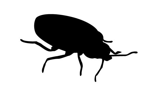 550x354 Bug Silhouette Vector Clip Art And Silhouettes