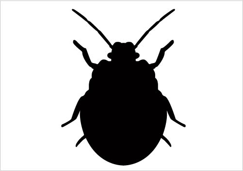 501x352 Bugs Clipart Silhouette