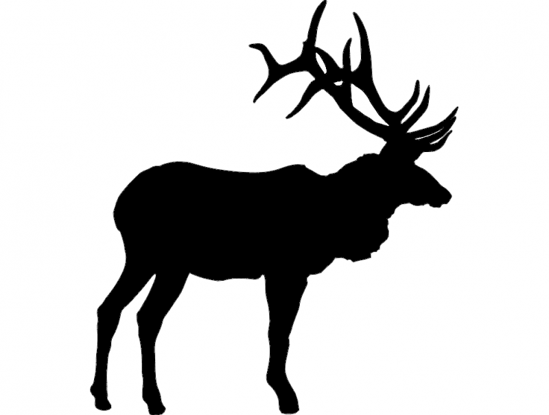 800x606 Large Bull Elk Dxf File Free Download