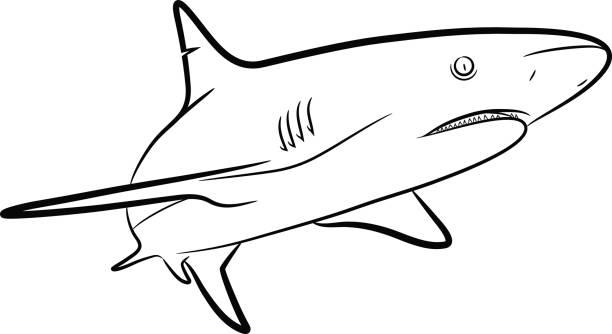 612x334 Bull Shark Clipart Shark Outline Many Interesting Cliparts