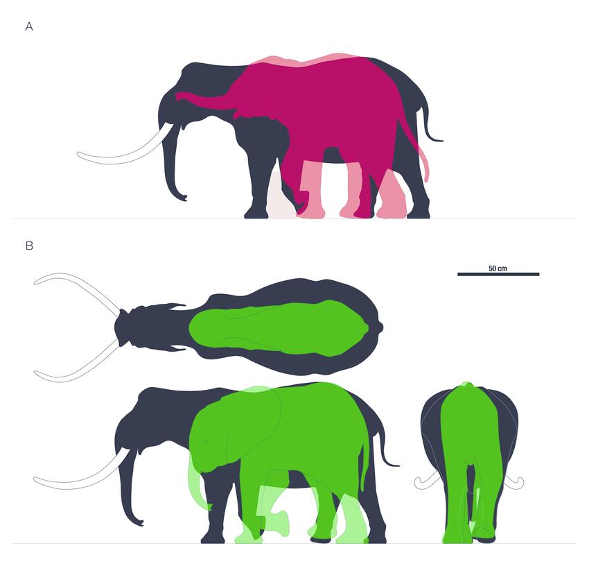 850x826 Comparative Silhouettes Of Palaeoloxodon Ex Gr. P. Falconeri