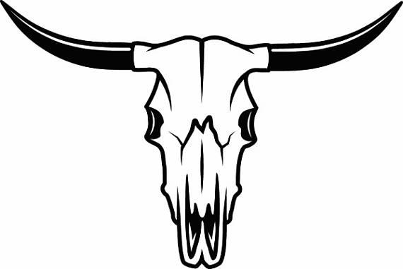 570x381 Bull Skull 1 Skeleton Bones Horns Cowboy Country Western Cow