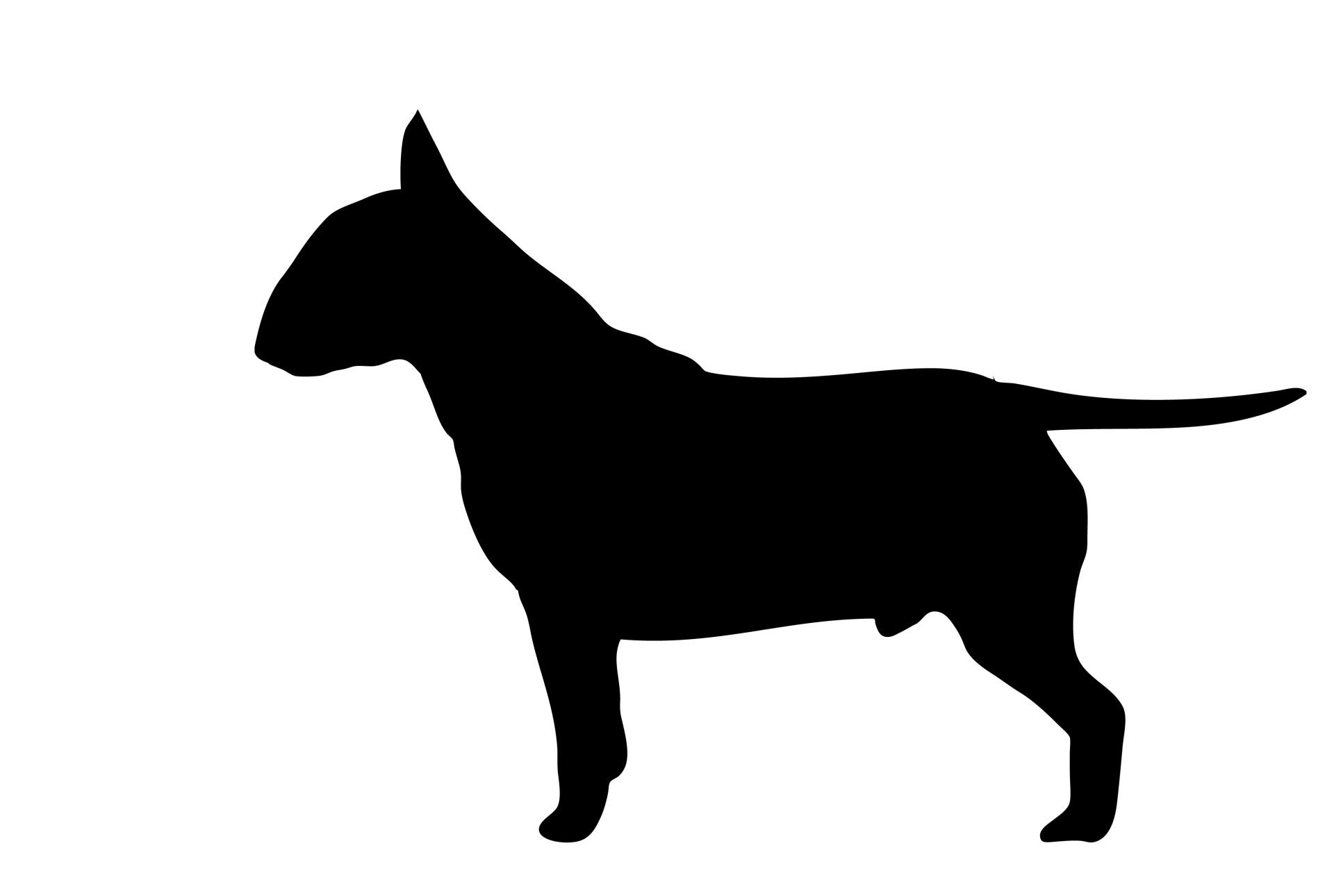 1920x1280 Dog, Bull Terrier Black Silhouette Free Stock Photo