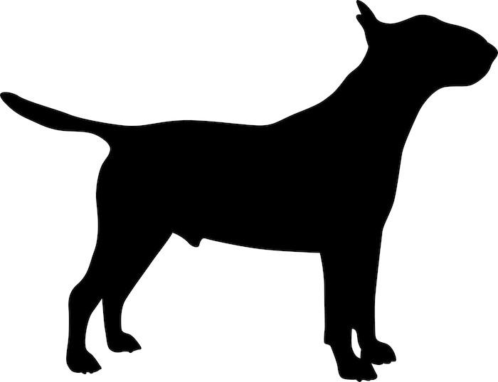 700x537 Bull Terrier